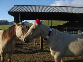 Horse Chirstmas One by rachellafranchistock