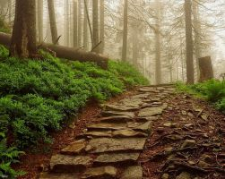 Stairs to the fog by miirex