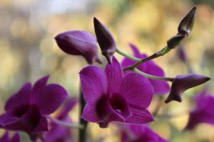 ORCHIDEE by fbilauvergnat