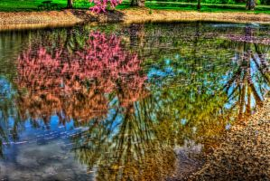 Reflecting Color by Elva-Luthien