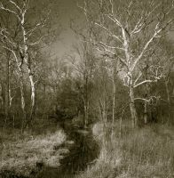 Creek path.img653 by harrietsfriend