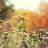 autumn meadow by topinka