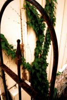 Creeping Vine, Rusting Gate by XxMoonlit-UchihaxX