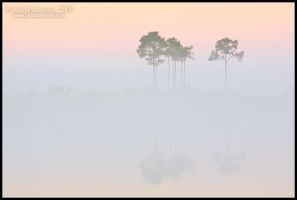 Dawn Revealed by juddpatterson