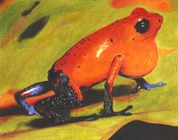 Poison Dart Frog by Xantiel