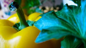 Yellow pepper by TortueBulle