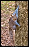 Squirrel by cgphotopro