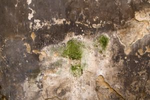 Grungy Plaster Texture 01 by goodtextures