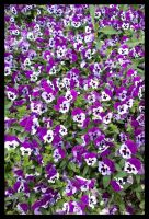 Purple Pansy Pile by Leichenengel