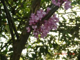 pink flowers on a tree by TheForsakenSailor
