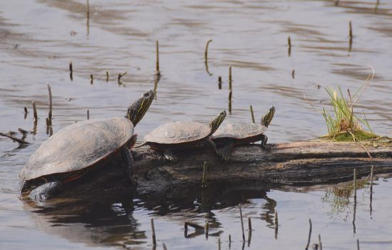 So Happy Together -- The Turtles by drigulch
