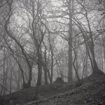Sinuous trees in the mist by yuushi01