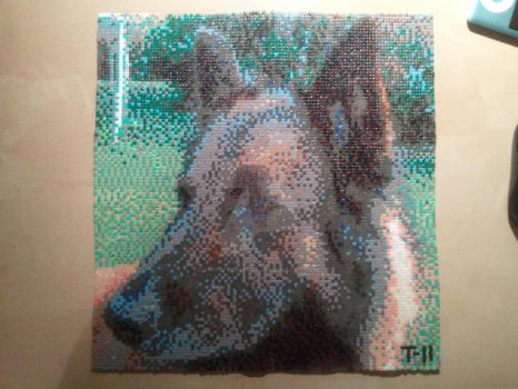 My dog in perler beads by msSUPERGIRLX3