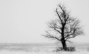 snowy tree. by kingdaughter