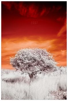the day was red by werol