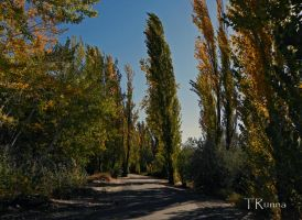 Along the Loop Trail by TRunna