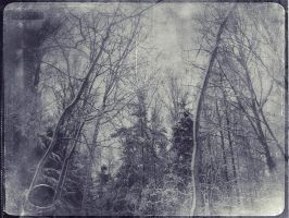 forest in rectangle by earational
