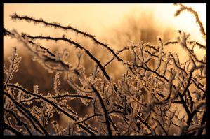 Frozen crystalized Frost by MikeysPhotos
