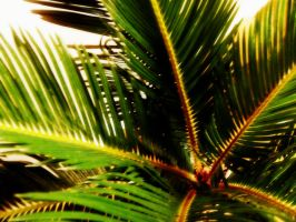 Cycad 1 by Nikee97