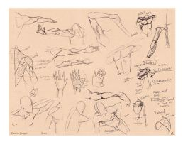 Arms - Comparative Anatomy by CatCouch