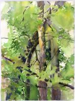 Plein air in the forest. 26.07.2014 by OlgaSternik