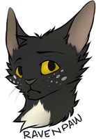 Ravenpaw by Kexity