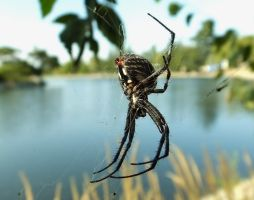 Spider 01 by Treeclimber-Stock