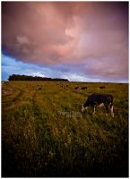 Grazing Two by Solau