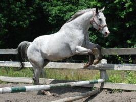 Appaloosa 99 by Spotstock
