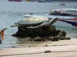 turtle on the beach by two-ladies-stocks