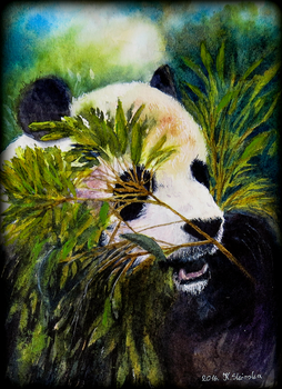 Card8 Panda Bear by EarlyOctober