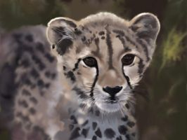 cheetah baby by michb1