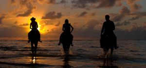 sun and horses by poivre