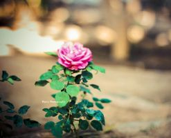 Beautiful by Blurry-Photography