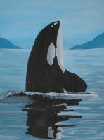 Orca Whale by Garcia001