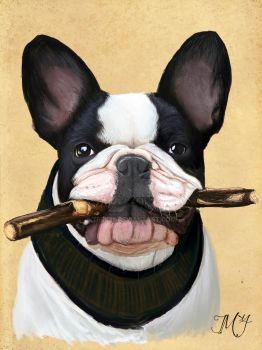Butch - The French Bulldog by Trek25