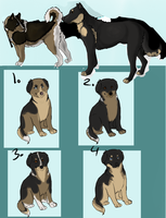 Branden x Leeshei Litter by Park-Kennel
