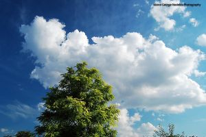 Puffy clouds by geographu