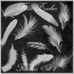 Feathers Brushes Set 1 by Falln-Stock