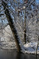Falling tree in snow by rollarius55