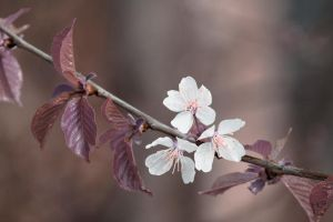 5261 - Spring flowers by Jay-Co