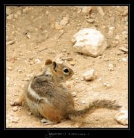 Squirrel II by Crooty