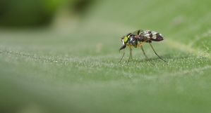 Macro 2892 by craigp-photography
