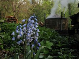 bluebells and charcoal burning by Ommadawn
