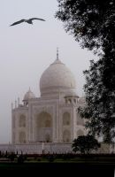 TAJ BIRD by TADBEER