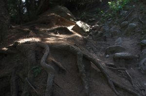 Roots II by voldemometr