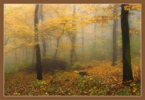Misty Forest by vikingexposure