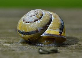Snail house by FrankAndCarySTOCK