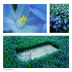 Sleep forever in blue by andaria