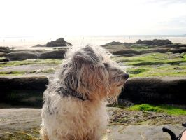 Regal by the Sea by TinaMansellEaton